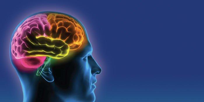 insulina a mózg