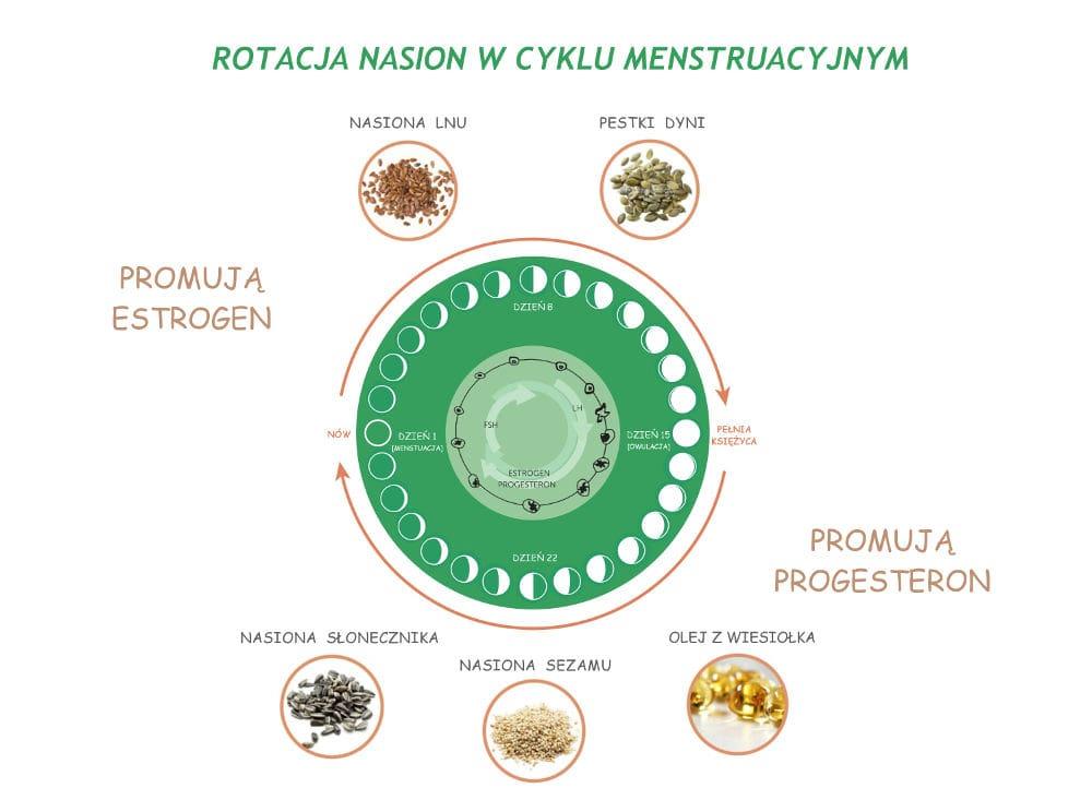 rotacja nasion cykl menstruacyjny